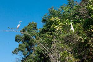 republique-dominicaine_oiseau_falaise_los-haitises_300x200